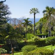 Quinta da Casa Branca 17, Funchal Hotel, ARTEH